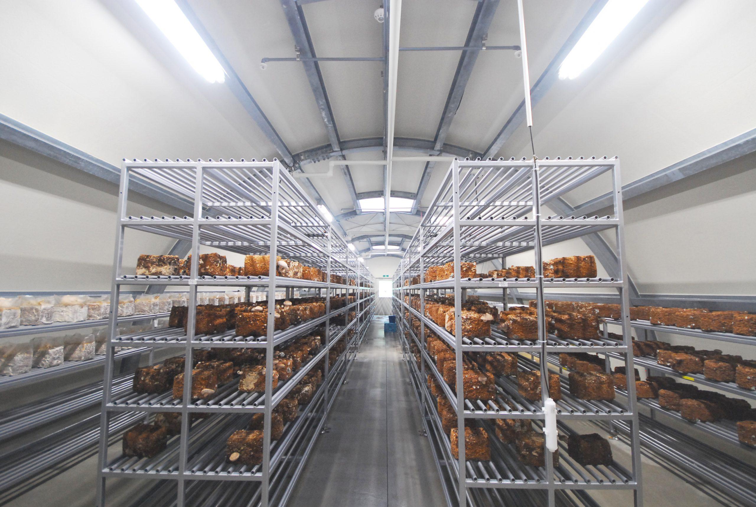 伊達植物工場内観