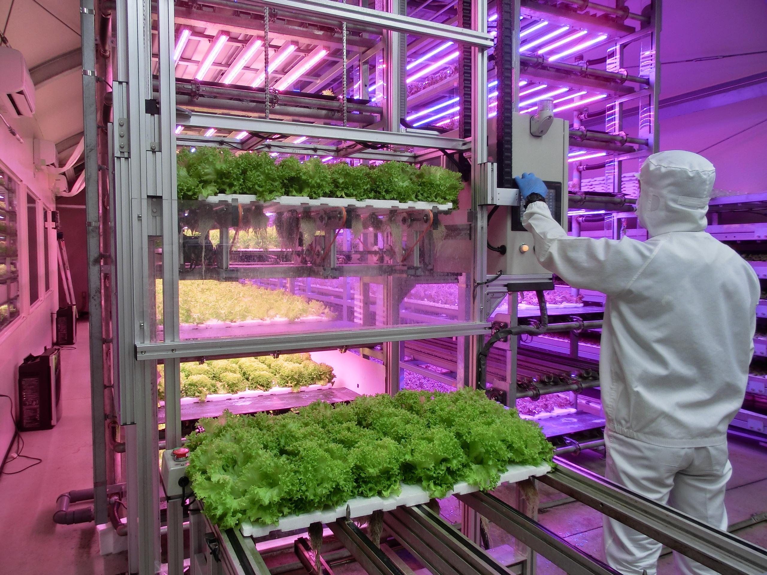 千葉大学 植物工場 ロボット使用